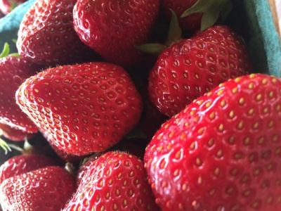Pick Your Own Strawberries is OPEN today!!